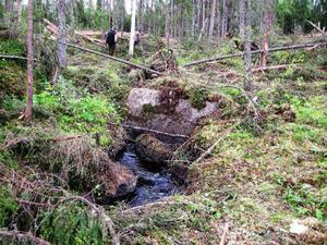 SCA anser inte att man har gjort fel när man avverkade i Norrby. Det anser däremot Naturskyddsföreningen vilka också har dokumenterat miljöbrottet.– Man är skyldiga enligt lag att lämna en skogsridå när man avverkar vid vattendrag, säger Naturskyddsföreningens ordförande Pieter Fürst.