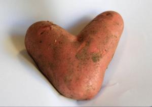 Ruth Knutas drog nyligen upp den här hjärtformade potatisen ur sitt land i Ås.Foto: Olof Sjödin