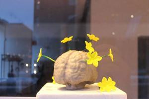 MalinMatilda Allberg låter en titanhjärna blomma.