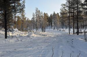En nybruten skogsväg leder in i det område där provborrning nu ska ske.