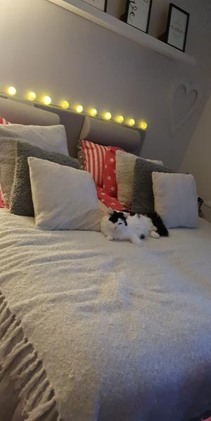 116) Här är min fina tjej Mysan, från att vara rädd och osäker till att bli den mest gosiga och snällaste katt jag känner. Min fina Mysan Foto: Pernilla Wängman