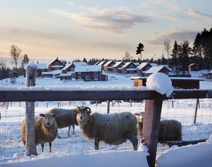 December 2010, Segersäng.