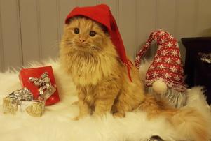 95) Rufus väntar förväntansfullt på julen. Foto: Sandra Haglund Wennberg