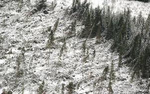 Orkanbyarna jämnade på sina ställen skogen med marken, som här i närheten av Hultaby strax väster om Vetlanda.