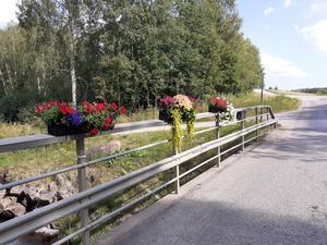 Bybor i Vattlång har satt upp blomsterlådor som pryder Vägverkets broräcke. Foto: Eva Andersson