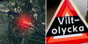 Två personbilar kolliderade med samma älg på E16 utanför Borlänge under fredagskvällen.