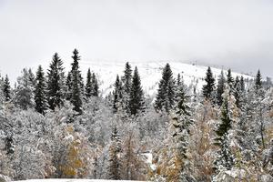 Snöfall väntas över de norra delarna av Dalarna i veckan. Upp till 5 cm på vissa platser.