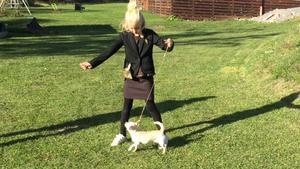 Till skillnad från de övriga klasserna vid en hundutställning så är det inte hunden som bedöms i Barn med hund, utan hur föraren visar sin hund och samspelet dem emellan.