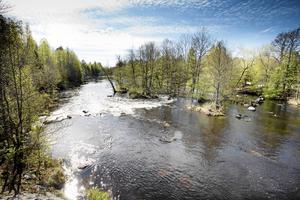 Att sänka nivåerna i Harmångersån har aldrig varit aktuellt, skriver Ola Wigg och Stig Eng.