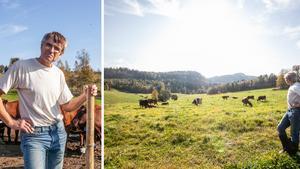 """Mjölkbonden Peter i Nordingrå sadlade om – satsar på eko: """"Lät spännande"""""""