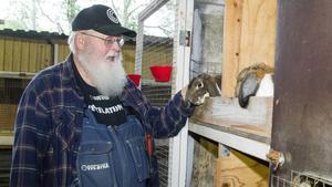 Johny Stolpe bland uteburarna på sin gård. Han säger att ibland får de köpa in djur från Tyskland för att vidga genpoolen.