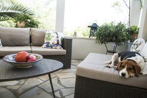 Hunden som fått namnet Jaques Bill valde själv ut Ariana och Arne som matte och husse. Han flyttade bara in.