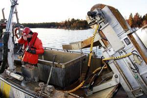Oljan landar i en 1,4 behållare som rymmer kubikmeter. Johan Lund ser till så att inte allt för mycket skvätter bredvid.