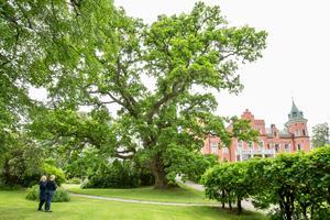 Den gigantiska eken i parken är 600 år, berättar Sandra Hamilton.
