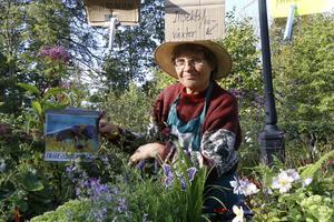 Insektsdragande växter och perenner i massor, Karin Frisell från Varamon Handelsträdgård hade det frodigaste ståndet på årets skördemarknad.