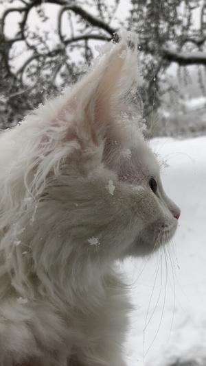 180) Selma i första snöfallet. Foto: Greta Inancsi