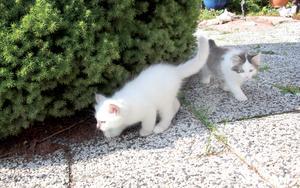 Kattungarna är åtta veckor och ute för första gången.