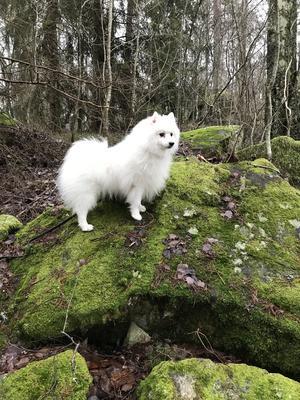 Om bilden: Julen 2019. Hampus på promenad i rönnbyskogen på annandagen 2019. Foto: Carina Lundin
