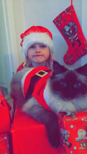 Detta är Pärlan, en gosig tjej på snart 2 år. Min dotters bästa vän. gör allt tillsammans, till och med badar tillsammans. Nu vankas det en till mysig jul med katta och alla julgranskulor som kommer ligga överallt i lägenheten. God jul önskar Signe och katten Pärlan. Bild: Christel Kykyri