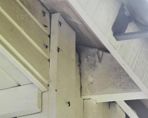Getingar som fått sitt bo besprutat med bekämpningsmedel flockas utanför boet.