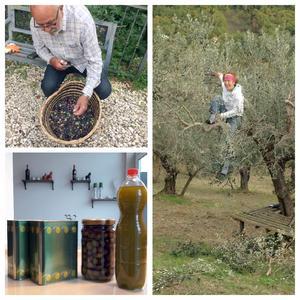 Det var roligt att plocka oliver.
