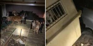 Redan för 14 år sedan fick kvinnan djurförbud efter att ha dömts för djurplågeri. Trots det har hon gång på gång skaffat nya djur som hon inte klarat att sköta om.  Foto: Polisen