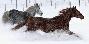 Hästar är en trevlig hobby, men glöm inte de stora ekonomiska värden som hästen representerar, skriver debattörerna. Foto: Uwe Lein