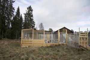 Hundgården byggdes när paret flyttade upp. Den har god berikning, är rymningssäker och har bra dränering.