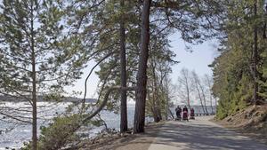 Att tala om skogsskövling för att sju träd ska fällas är överdrivet, menar insändarskribenten. Foto: NP/arkiv