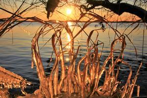 Naturlig skönhet: Isskulptur format av Mälarens vatten som blir belyst av kvällssolens strålar. Foto: Roland Moberg