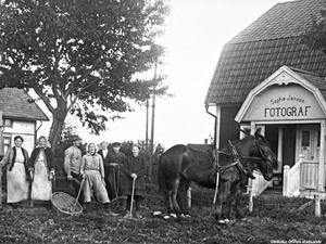 Potatisupptagning utanför Sophie Janssons fotoateljé i Knista, Fjugesta. Fotograf: Sophie Jansson. Bildkälla: Örebro stadsarkiv