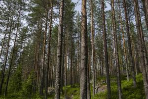 Öna gemensamhetsskog har ägt 1277 hektar produktiv mark i Dalarna. Marken har nu sålts till företaget Öna skog AB. Foto: Vidar Ruud/TT