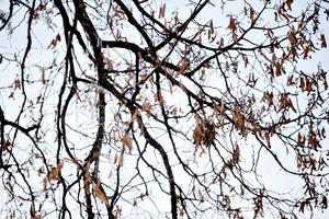 Träden blommar inte än i området, det är gynnsamma vindar från Södra Sverige som fört med sig pollensporer.