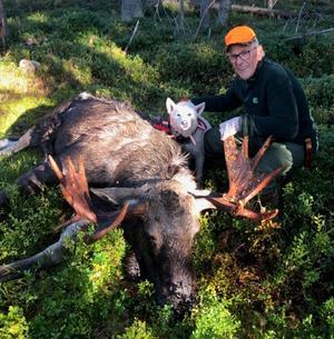 Här kommer en bild från jaktlaget Idenor VVO som jagar mellan Hudiksvall o Iggesund på cirka 3500 hektar. Efter två dagars jakt har de redan skjutit 3 av 4 tilldelade vuxna, land annat denna 14-taggare. Skytt Bernt Bodell, hund Wikstabergets Bonzo,  Forsa.