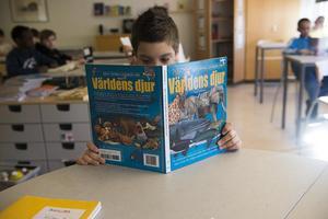 LegiLexis vision är att alla barn ska lära sig att läsa ordentligt under lågstadiet. Foto: TT