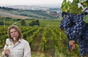 Varje region i Italien har sina egna vintyper. Och inget vinland säljer mer på Systembolaget än Italien. Nära var tredje liter vi dricker är italiensk. Foto: Sune Liljevall