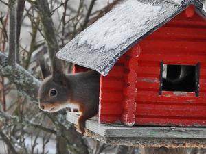 """""""Kurre"""" jagade bort fåglarna och fick sig ett skrovmål i lilla stugan. Foto: Sam Adolphson."""