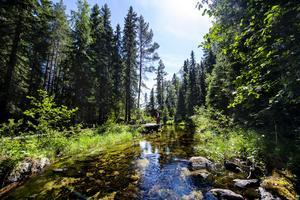 Navaråns naturreservat.