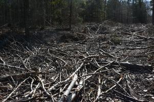 Det kan vara en sorglig syn att besöka en skogsparti som nyss avverkats. Foto: Privat