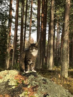 15) Den vackra katten, Svea 8 år på den dagliga skogspromenaden med sin matte. Foto: Helena Spring