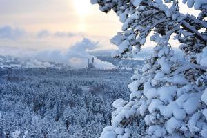 Skogen är upphov till en ständig tvistefråga på grund av motstridiga intressen: Hur mycket av den ska vara en förnybar resurs som avverkas och nyplanteras regelbundet runt typ vart 80:e år, och hur mycket ska bevaras som gammal skog med höga och skyddsvärda naturvärden? Bortom Varvsbergsskogens tallar och granar syns här Domsjö Fabriker.