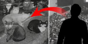 Utan tillgång till mat och vatten levde 54 katter i huset. Nu har ägaren fått djurförbud och katterna har avlivats. Foto: Länsstyrelsen