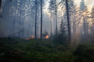 Risk för brand i skog och mark i Västernorrland.