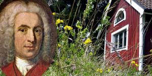 Carl von Linné, mannen som sände naturens väckelse över oss som ännu lever kvar, porträtteras i ny biografi. Bild: Hasse Holmberg (ej montage)
