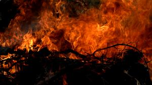Kvistar och grenar är okej. Man man får inte elda löv och gräs.