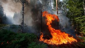 Foto: Fredrik PerssonBild från den stora skogsbranden 2014.