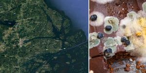 Foto: Googlemaps och TT