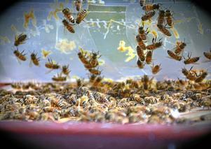 Tusentals bin installerades på torsdagen.
