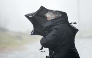 Mycket hårda vindbyar väntas i länet. Foto: Arne Depert/AP/TT