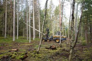300-500 träd måste avverkas akut i kommunens skog i Mölnbo, intill Bergasjön.
